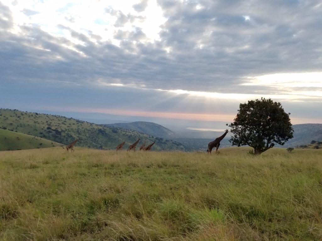 Sunrise in Akagera National Park in Eastern Rwanda. Image by Elham Shabahat. Rwanda, 2017.