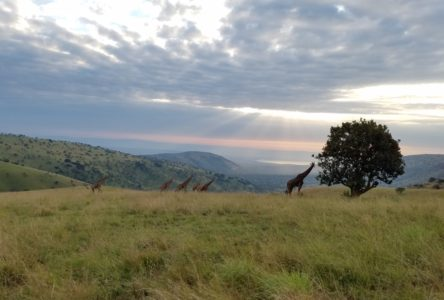 Rwanda: Complexities of Conservation in Akagera
