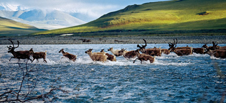 Americans oppose drilling in Arctic National Wildlife Refuge