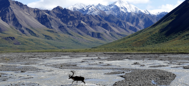 Americans oppose drilling in the Arctic National Wildlife Refuge